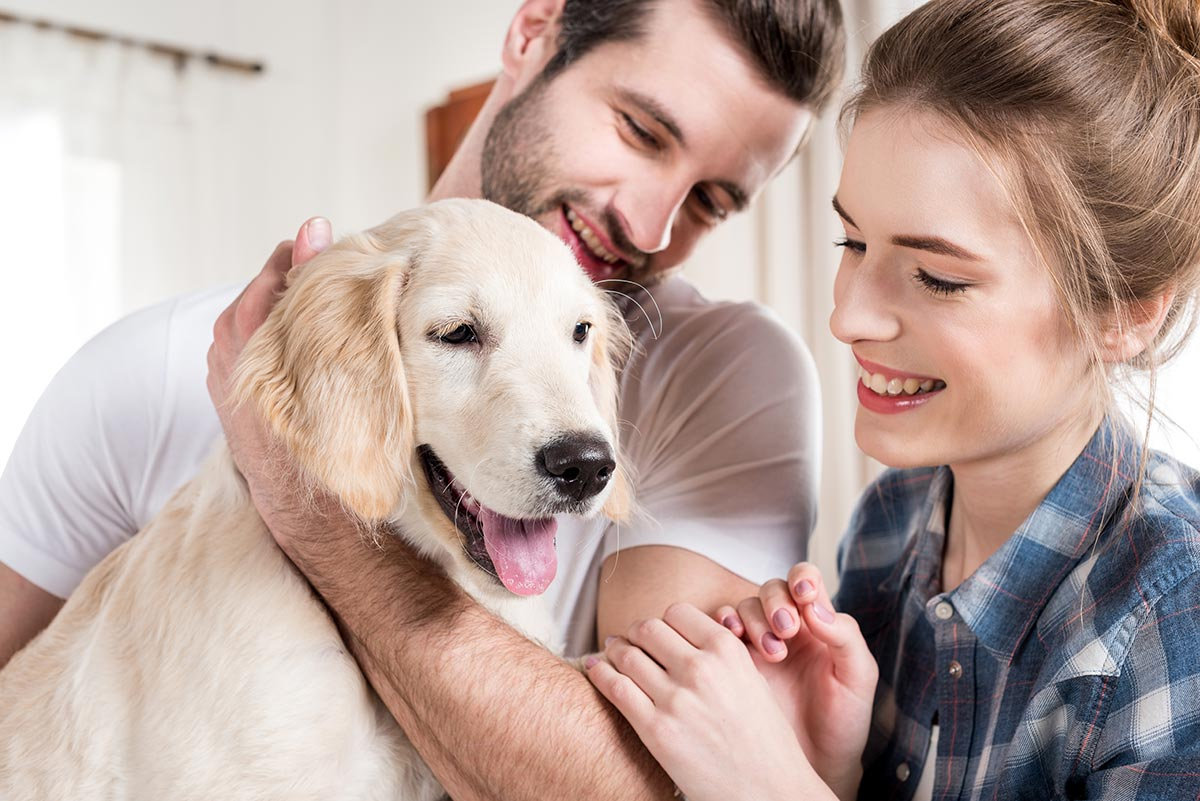 Fake pet adverts lead to large losses